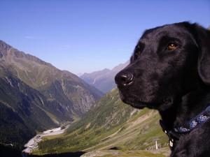 Bergwelt Stubai