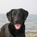 deutscher Rettungshund