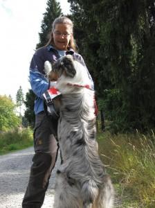 Flächensuchhund der Rettungshundestaffel Hof / Saale