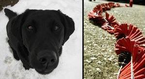 Hund hat Angst vor Silvester-Lärm