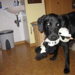 Hund mit Spielzeug Berta