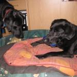 Hunde-Knochen