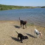 Hunde spielen in Leipzig am See