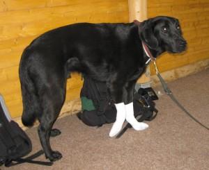 Hunde-Pfotenverband