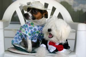 Hundekleidung - Hundekostüm