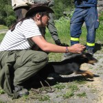 hundetraining-chur