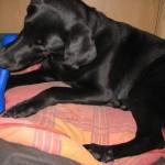 Kira mit ihrem Hundeleckerlie-Knochen