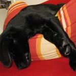 komische Schlafposition beim Hund