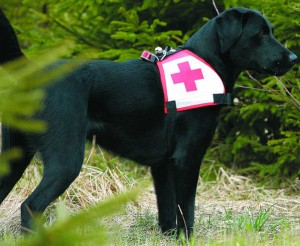 Rettungshund Chicco benötigt ebenfalls besonderes Hundefutter
