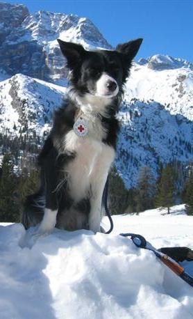 Rettungshund Klingenthal Suchhund Flynn