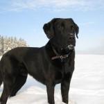 Rettungshund im klingenthaler Schnee