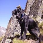 Rettungshund mit Hut