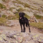 Rettungshund Österreich