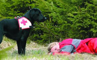 Rettungshund Suchhund