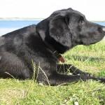 Rettungshunde Vogtland Chicco