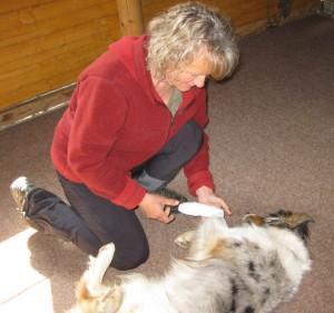 Rettungshunde-Training erste Hilfe