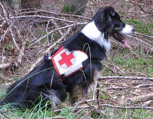 Rettungshundetraining - Kitzingen