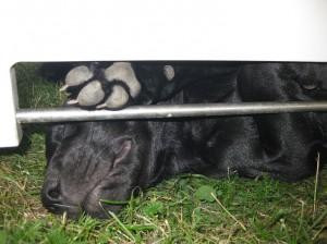 schlafender Rettungshund