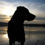 Sonnenuntergang-Stimmung mit Hund