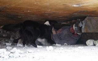 Rettungshund bei der Truemmersuche