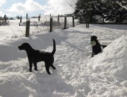 Winter in Klingenthal & Hunde